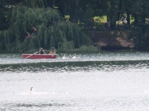Schwans am 7.August mitten auf dem See