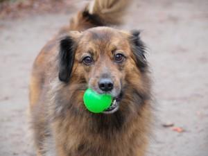 gut erzogener Hund am Weissensee