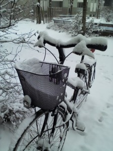 """""""Schneetransport"""" per Fahrrad??"""