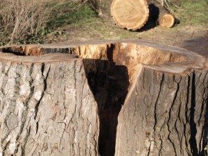 hohler Baum am Weissensee